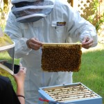 Looking for the queen bee, beekeeping in Kitsap