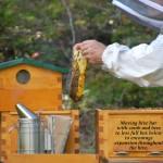 Warre beehive, beekeeping in Seabeck