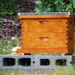 Bee nuc