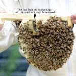 beehive honey comb