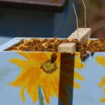 beekeeping warre bee hives