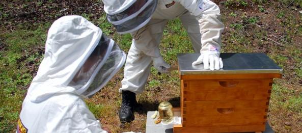 Boardman feeder that feeds sugar water to beehive