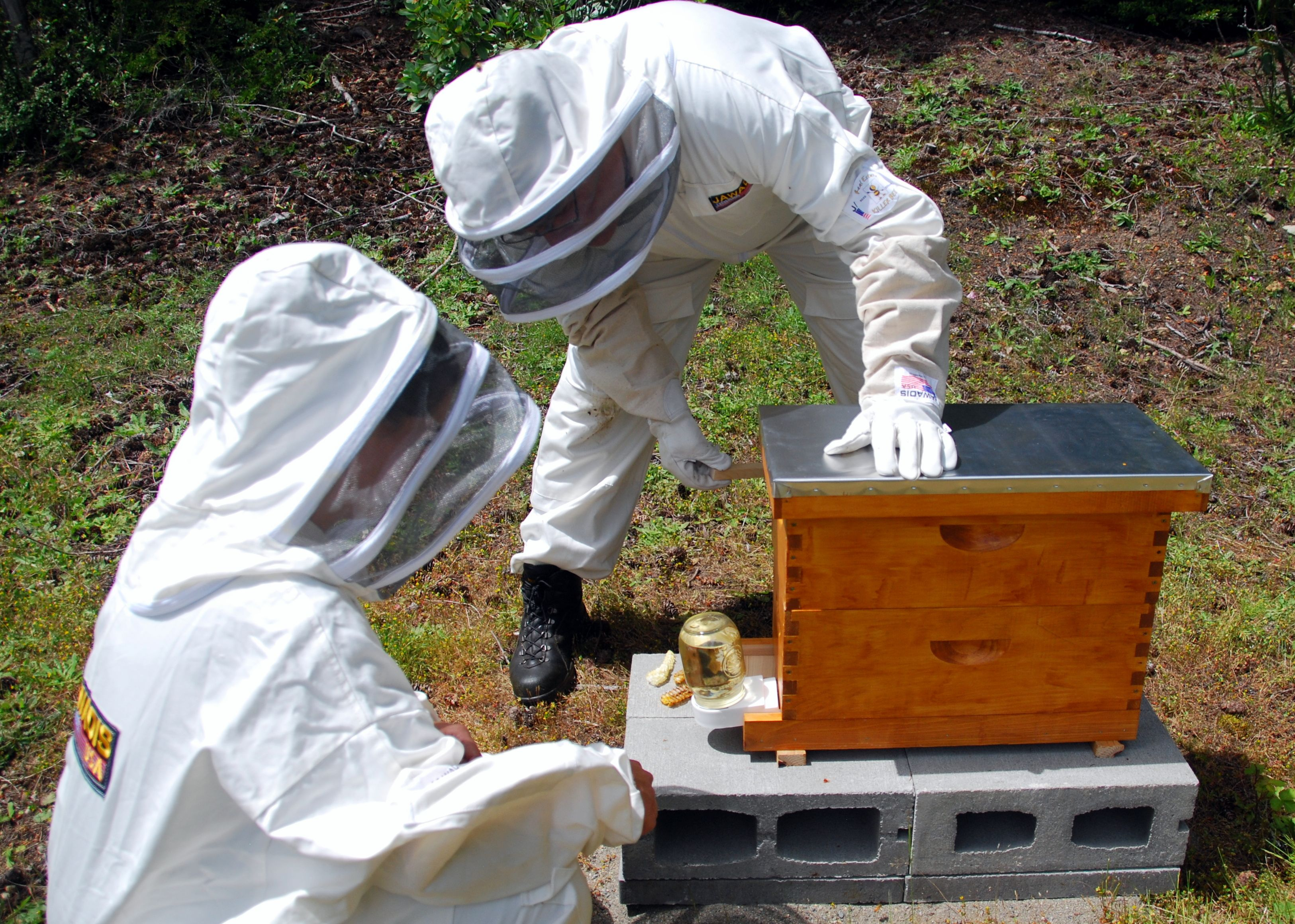 the hive bee on a beekeepers parasite feeder blog contact feeders tales from tag beehive