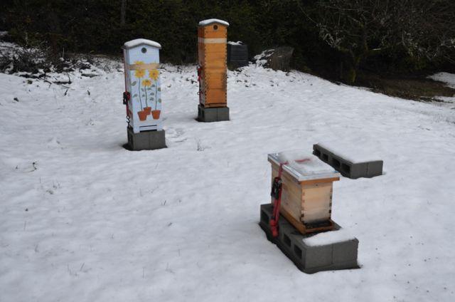 Beehive, beekeeping, seabeck, bees, honeybees, overwintering bees