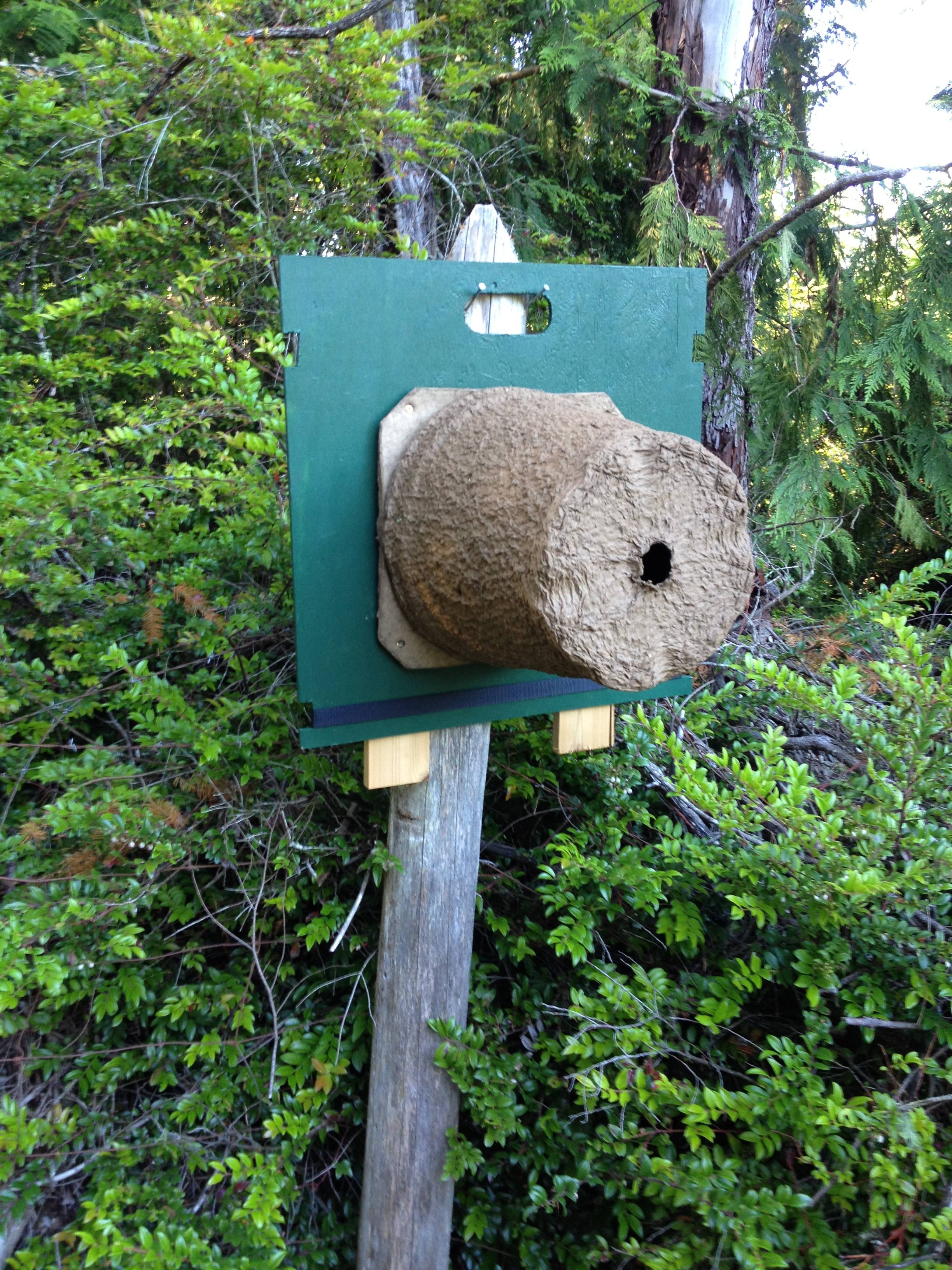 Swarm Trap In Seabeck